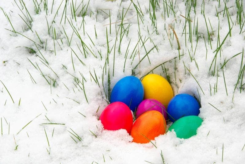Les œufs gelés!